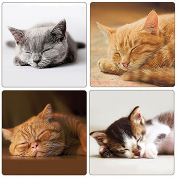 Sleepy Cats Set of 4 Square Coasters - Boxed
